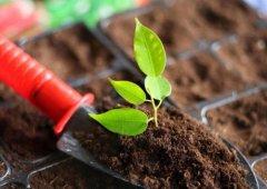 土壤养分快速测定仪指导合理施肥