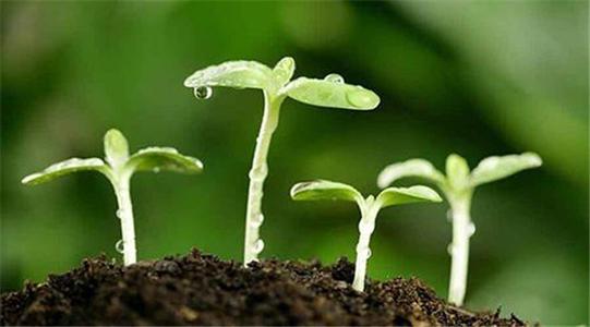 土壤水分对植物养分吸收的影响